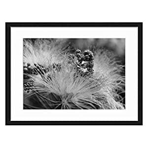 Wood Framed Canvas Artwork Home Decore Wall Art (Black White 20×14 inch) – Flower Pink Blossom Mimosa Silk Summer Nature