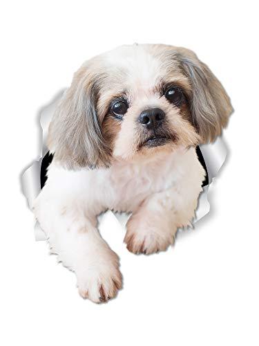 Winston & Bear Curious Shih Tzu Dog Wall Decals - 2 Pack - Shih Tzu Dog Toilet Sticker – 3D Dog Car Window and Bumper Sticker - Retail Packaged Shih Tzu Lover Gifts