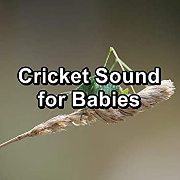 Cricket Sound for Babies