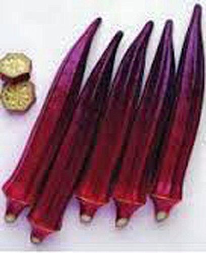 Gombo, Bourgogne rouge gombo graines, bio, sans OGM, 25 graines par paquet,