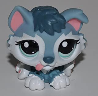 Husky Puppy #2036 (White, Grey, Blue Eyes) - Littlest Pet Shop (Retired) Collector Toy - LPS Collectible Replacement Figure - Loose (OOP Out of Package & Print)