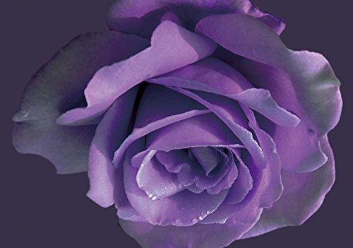 100pcs graines Rose, graines exotiques rares graines chinois fleur rose pour les plantes de jardin à la maison, 24 couleurs 2