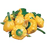 Park Seed Sunburst Hybrid Squash Seeds, Includes 20 Seeds in a Pack