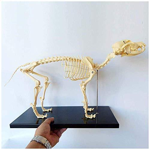Modelo Educativo Modelo anatómico del Esqueleto del Perro canino - Anatomía del Esqueleto del Perro - Modelo anatómico Animal - para la Herramienta de demostración de la enseñanza Veterinaria Enseña