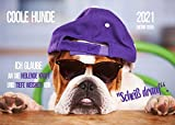Edition Seidel Coole Hunde Premium Kalender 2021 DIN A3 Wandkalender Hundekalender lustige Sprüche Motivation
