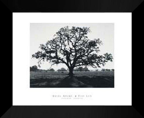 Ansel Adams FRAMED Art Print 20x24  Oak Tree Sunrise