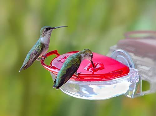 Aspects ASPECTS437 The Gem Window Hummingbird Feeder