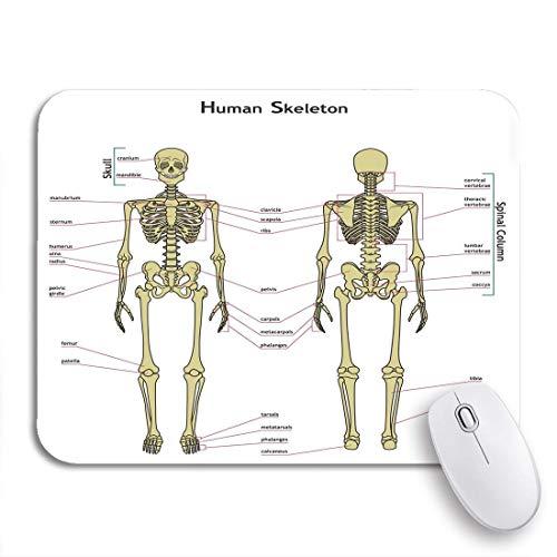 Alfombrilla de ratón para juegos esqueleto humano tablero didáctico anatomía diagrama del sistema óseo alfombrilla de ratón antideslizante con respaldo de goma para portátiles ordenadores alfombrillas