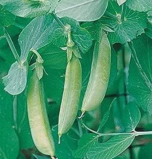 GEOPONICS semences pois ugar Pium ativum