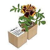 Eco-Woody | Regalo ecologico e sostenibile | Cubo di legno magnetico con semi di Tagete | Kit per la coltivazione facile di piante in casa