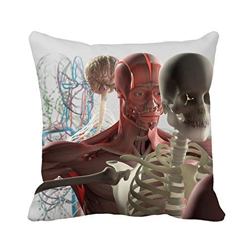 N\A Throw Pillow Cover Anatomía Humana Vista en despiece Deconstruido Que Muestra Partes separadas Músculos Funda de Almohada Funda de Almohada Cuadrada Decorativa para el hogar Funda de cojín