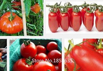 Jardin des plantes top vente rare en bonsaï non-ogm graines de tomates, chaque paquet de 200 graines et délicieuses graines de légumes Shanghai, Chine Bons