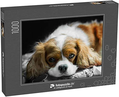fotopuzzle.de Puzzle 1000 Teile braun-weißer Cavalier King Charles Spaniel Hund auf einem Kissen liegend innenliegend (1000, 200 oder 2000 Teile)