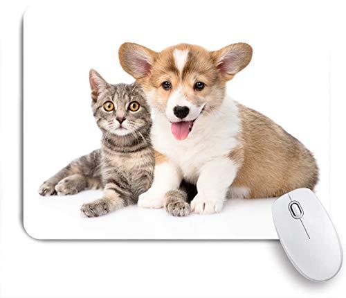 Marutuki Gaming Mouse Pad Rutschfeste Gummibasis,Pembroke Welsh Corgi Welpe, der mit Katze zusammen liegt und Kamera betrachtet,für Computer Laptop Office Desk,240 x 200mm