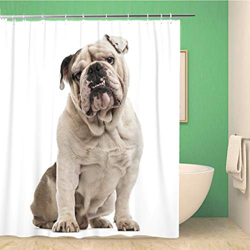 Awowee - Cortina de Ducha (180 x 180 cm, poliéster), diseño de Bulldog inglés Sentado y Mirando a la cámara