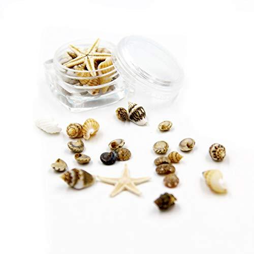 DREAMDEER Petite Plage Naturelle Coquillage étoile de mer décor Nautique Nail Art Fabrication de Bijoux