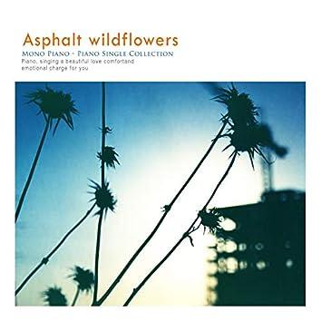 아스팔트 위 들꽃