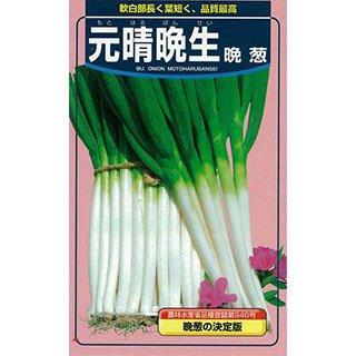ネギ 種 ネギ元晴晩生 小袋(約20ml)
