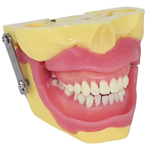 XIEZIModelo Anatómico Humano Modelo De Dientes para La Educación Modelo De Extracción De Anestesia De Extracción Modelo De Extracción De Dientes Dentales Modelo De Cirugía Oral Anestesia Es