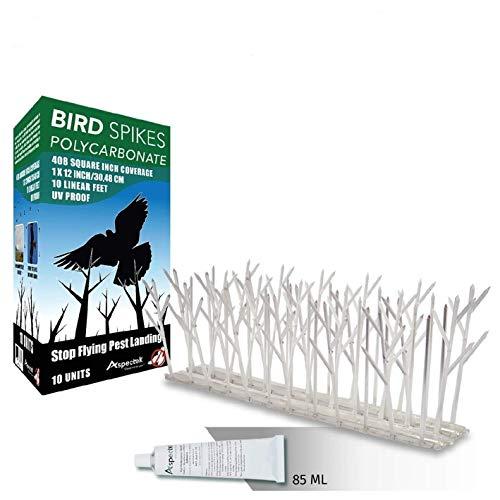 Aspectek Taubenspikes- Spikes zur Vogelabwehr - wetterfeste Taubenspikes und Vogelspikes - Polycarbonat oder Edelstahl - 10er Set