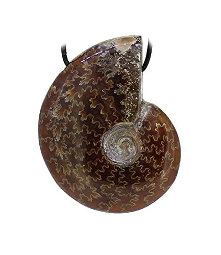 budawi® - Ammonit Ammoniten Anhänger Kettenanhänger mit Lederband, versteinerte Fossilien