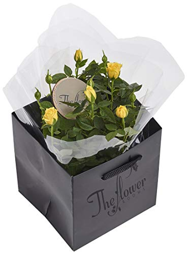 The Flower Rooms FRYROSE Yellow Rose Plant Gift, Mutiple
