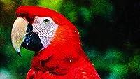 数字キットによるDIY油絵大人のためのアクリルキャンバスホームウォールデコレーションペイントワークス初心者-オウムコンゴウインコ鳥40×50cm(フレームレス)