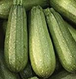 Elitely Semi di Bonsai 100 Zucchini Zucchini Grigio Summer Squash