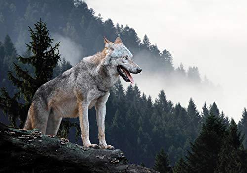 wandmotiv24 Fototapete Timberwolf Wald, XL 350 x 245 cm - 7 Teile, Fototapeten, Wandbild, Motivtapeten, Vlies-Tapeten, Wolf, Berg, Tannenwald M1479