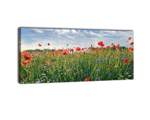 wandmotiv24 Leinwandbild Panorama Nr. 401 Blumenwiese 100x40cm, Keilrahmenbild, Bild auf Leinwand, Feld Sommer Blüten