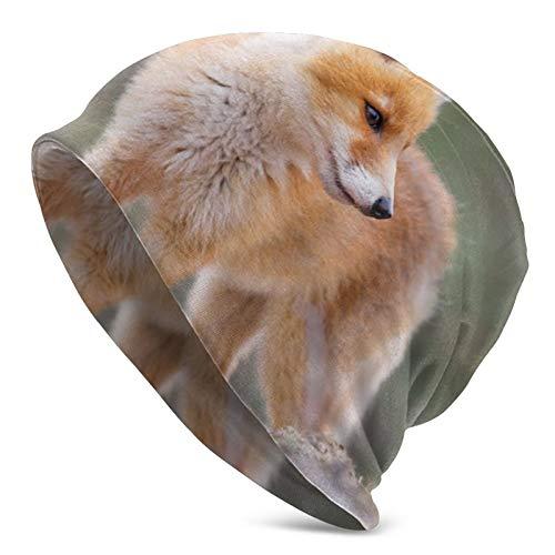 Niedliche Baby Fox Unisex Hip-Hop Hedging Hut Casual Beanie Cap