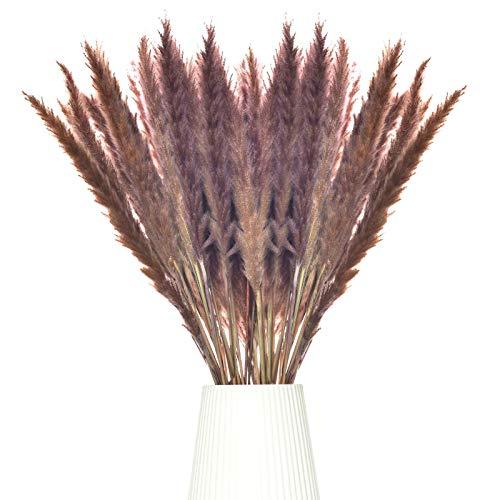 Erba di pampa essiccata, fiori secchi naturali, 60 cm, piccole fragmite, erba di pampa, marrone, mazzo di fiori, decorazione per la casa, il soggiorno, decorazione per la fotografia, hotel, matrimoni