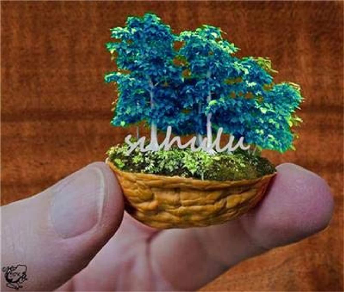 Rare Colorful Mini Seeds 50 Pcs/Bag Mixed Bonsai Tree s Pot Suit for DIY Home Garden Japanese So Cute Gift for Kids