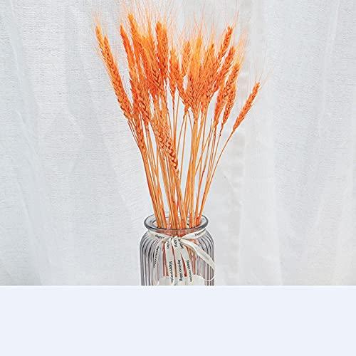 7st Bieslook Natuurlijke Gedroogde Bloemen Kunstplanten Tak Kleurrijke Ins Pampas Gras Phragmites Nep Bloem Bruiloft Woondecoratie 375-Oranje