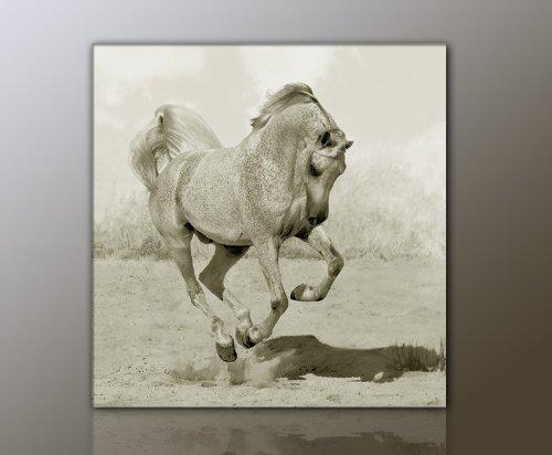 WILD Leinwandbild Bilder Pferd Pferdebild (horse4-50x50cm) Hengst Pferde auf Leinwand gerahmt - Bilder fertig gerahmt mit Keilrahmen riesig. Ausführung Kunstdruck auf Leinwand. Günstig inkl Rahmen