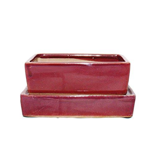 bonsaï Bol avec stockage de l'eau Dessous de Verre – Gr. 3 – Rouge – Rectangulaire – L 16,4 cm – L 11 cm – H 5 cm