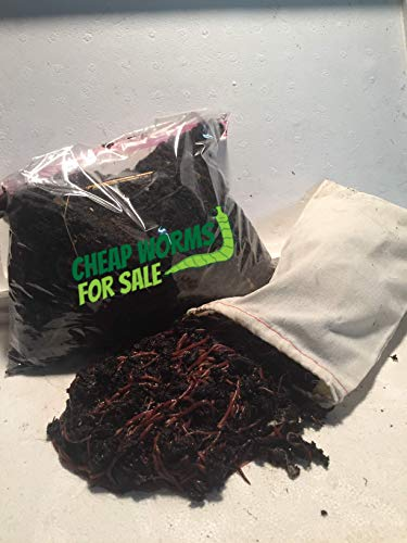 100 Red Compost Worms CheapWormsForSale