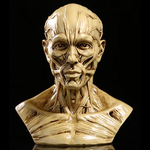 Statue Skulptur Ornamente Dekoration Hochwertige Harz Handwerk Mann Fehlschlag Körper Schädel Anatomie Muskel Simulation Medizinische Schaufensterpuppe Statue Abbildung Modell 10 * 8,5 * 6 Cm Ywrs07