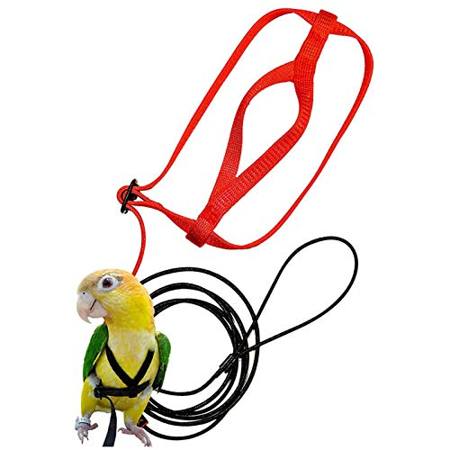 Haustier-Vogel-Geschirr Und Leine, Fliegendes Anti-Biss-Zugseil-Vogel-Training Im Freien, Das Für Papageien-Vögel Psittacus Erithacus Scarlet Macaw Trägt