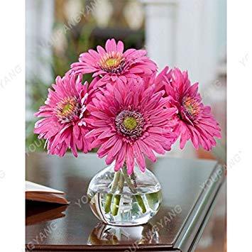 VISTARIC 3: Rare hybride Mixte Rouge Vert Rose Violet Lin Lin Hanging Bonsai Flowewr Graines, Paquet professionnel, 50 graines/Pack, Beau 3