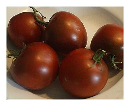 Tomate Black Prince - Tomate schwarzer Prinz - 15 Samen