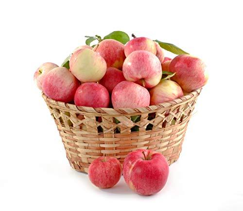 äpfel preis lidl