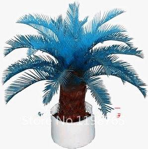 100 pcs/sac Bleu cycas Graines, Sagou Palm Tree Seeds. bonsaï Fleur Graines, le taux de en herbe 97% Rare Plante en pot pour maison jardin