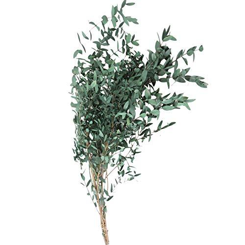 Eukalyptus Trockenblumen Echt, Eukalyptus Getrocknet Blumen Trockenblumenstrauß Hochwertige Reine Natürliche Pflanze Rundes Blatt Ewiges Leben Und Frisch Erhalten,Trockenblumen Deko Für Party 40-60cm