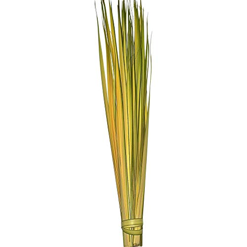 Palm Strips for Palm Sunday, Bag of 100 | Does Not Ship Until March 10th! | Guaranteed Delivery Before Palm Sunday!