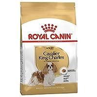 RC Cavalier King Charles