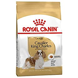 RC Cavalier King Charles