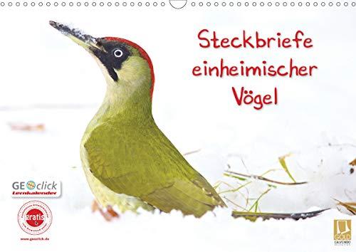 Steckbriefe einheimischer Vögel (Wandkalender 2021 DIN A3 quer)
