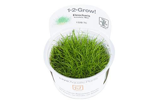 Tropica 1-2-GROW! Bonsai-Nadelsimse/Eleocharis sp. 'Mini'