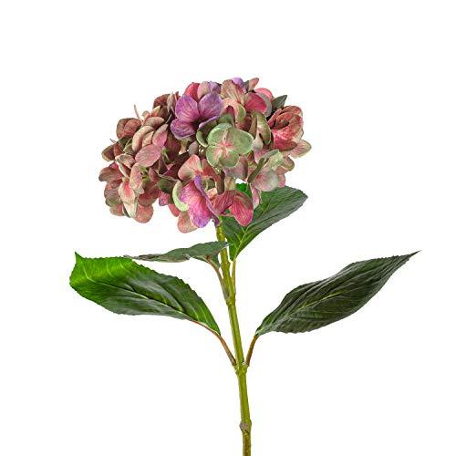 LEONARDO HOME Hortensie Poesia 54 cm...